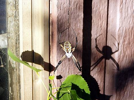 Jenna's Spider by Robert Moore