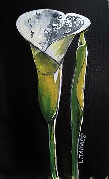 Jerry's Calla Lilies by Lynn Takacs