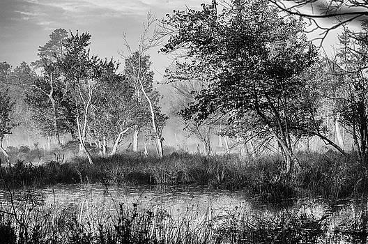 Louis Dallara - Jersey Pine lands in Black - White