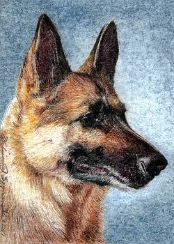 Jersey the German Shepherd by Melissa J Szymanski