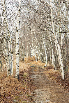 Jessup Path in Winter by Gordon Ripley