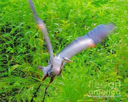 Tami Quigley - Jet Blue Takeoff