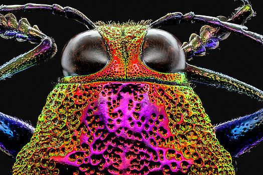 Jewel Beetle 3X by Gary Shepard
