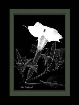 Rick Strobaugh - Jimsonweed Bloom BW grn
