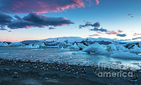Jokulsarlon Iceland Birds on the Move by Mike Reid