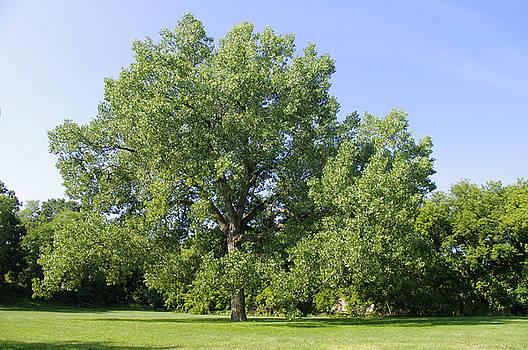 Joni's Meditation Tree by Valerie Hesslink