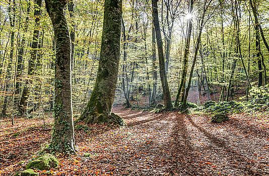 Jordan Beech Wood, Catalonia by Marc Garrido