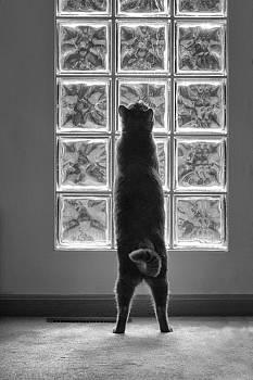 Joseph At The Window by Dick Pratt