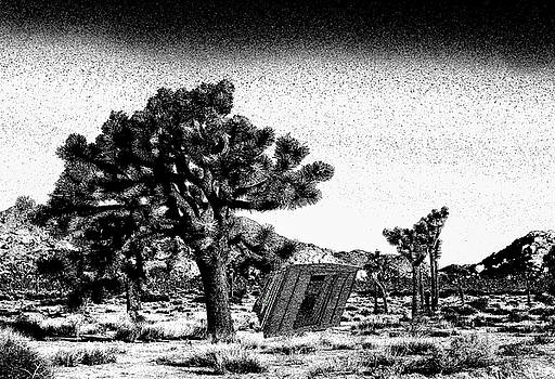 Joshua Tree and Homestead Cabin by Steven Howes