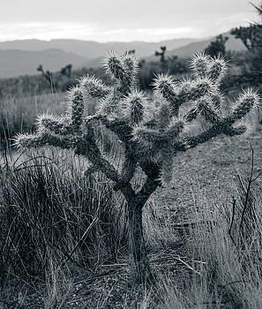 Joshua Tree Cactus by Smoked Cactus