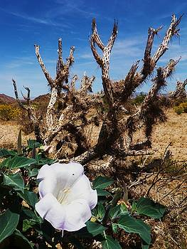 Joshua Tree Desert Bloom by Daniele Smith