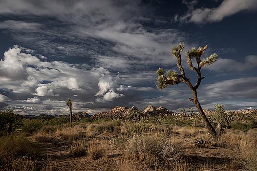 Joshua Tree Fantasy by Tod Colbert