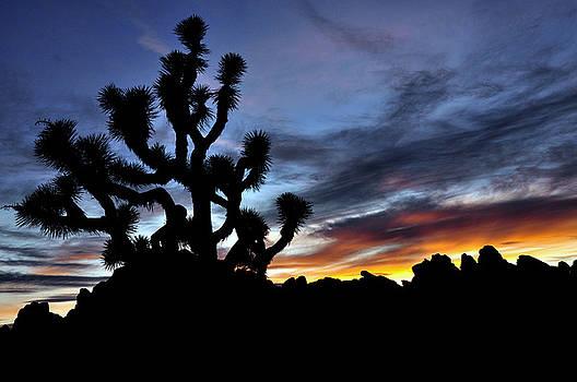 Joshua Tree Silhouette by Sandy Fisher