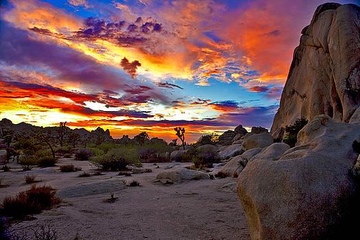 Joshua Tree Sunset 1 by Patrick Flood