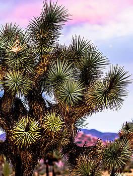 Joshua Tree Sunset by Smoked Cactus