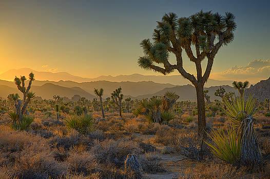 Ralph Nordstrom - Joshua Tree Sunset