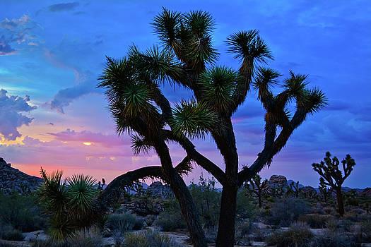 Joshua Tree Sunset Sky by Kyle Hanson