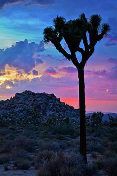Joshua Tree Sunset Sky Portrait by Kyle Hanson