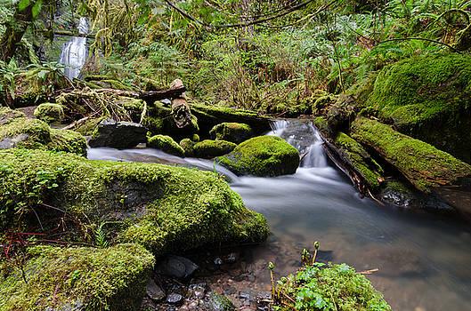 Margaret Pitcher - Journey Downstream