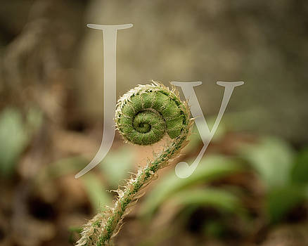 Joy Fiddlehead by Stephen Martin