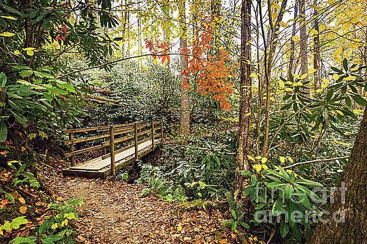 Joyce Kilmer Memorial Forest by Joan McCool