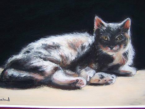 Judy's Cat by Susan Kneeland