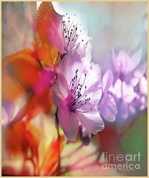 Juego Floral by Alfonso Garcia