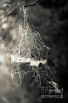 Jumbled Spider Web by Edward Fielding