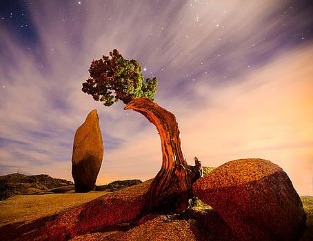 Jumbo Rock at Joshua Tree National Parl by Zoe Schumacher