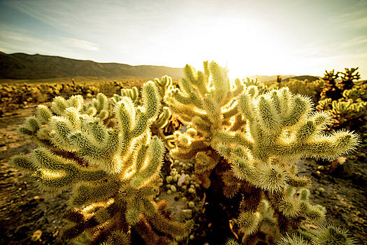 Jumping Cactus by Peter Irwindale