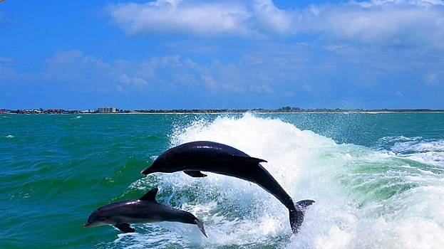 Jumping Dolphins by Beverly Reaume