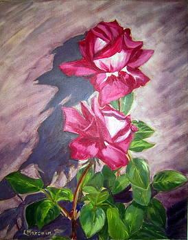 June roses by Lia  Marsman