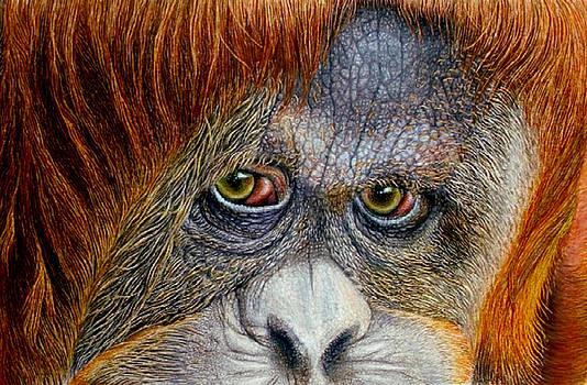 Jungle Enchantress by Karen Sharp