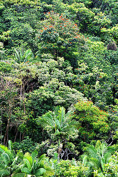 Jungle foliage by Joe Belanger