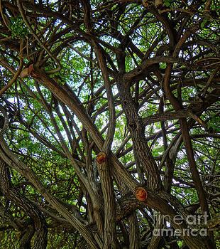Jungle maze by Gem S Visionary