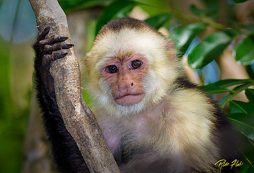 Jungle Monkey Portrait by Rikk Flohr