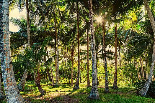 James BO Insogna - Jungle Paradise Sunshine