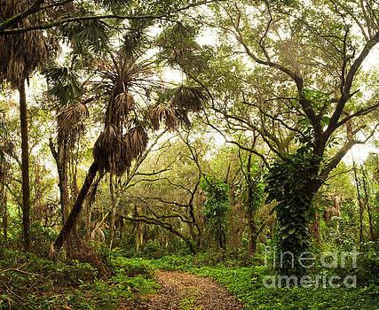 Jungle Road in Florida's Outback by Matt Tilghman