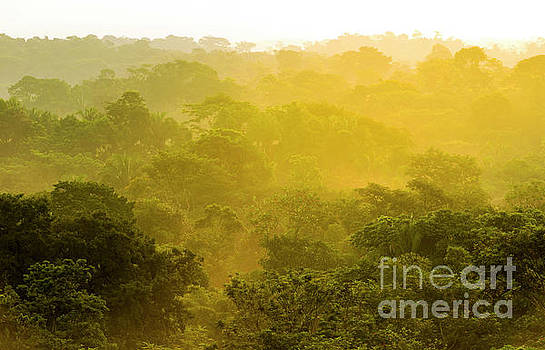 Jungle Sunset Treetops by Tim Hester