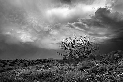 Mary Lee Dereske - Juniper Skeleton and Storm Clouds B W