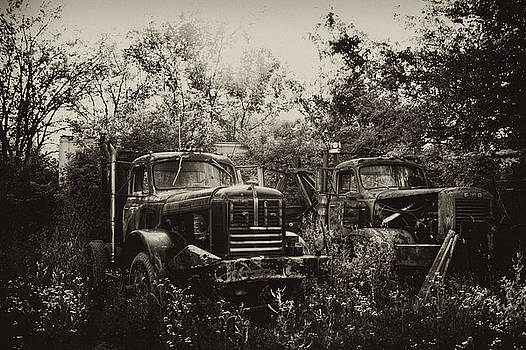 Junkyard Dogs III by Off The Beaten Path Photography - Andrew Alexander