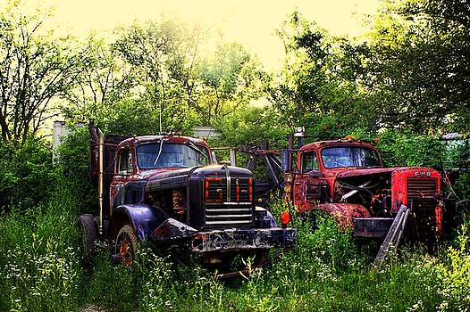 Junkyard Dogs by Off The Beaten Path Photography - Andrew Alexander