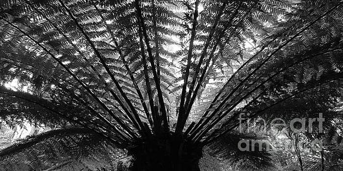 Tim Richards - Jurassic Fern BW