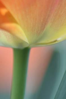 Just 2 Peachy  by Rachelle Johnston