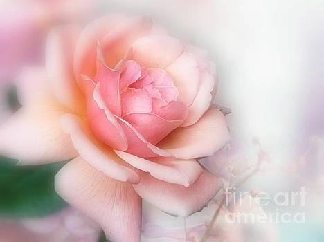 Just a Beautiful Rose by Morag Bates