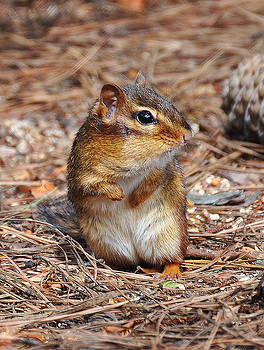 Just a Chipmunk by Russ Mullen