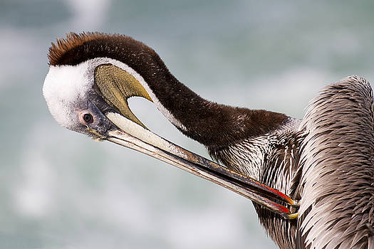 Just a little itch by Nathan Rupert