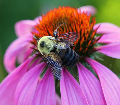 Just Bee-cause by Sheryl Bergman