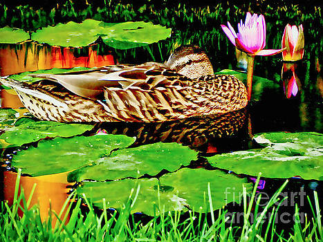 Just Being A Duck On A Lazy Day Of Summer by Carol F Austin
