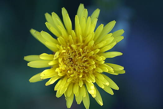 Just Dandy by Patricia M Shanahan